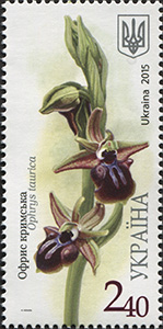ophrys taurica